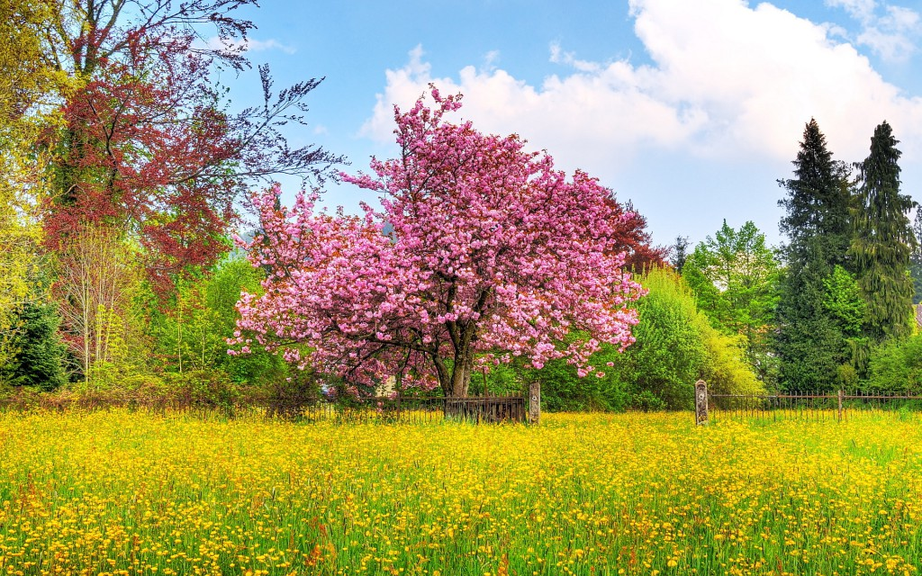 6909115-spring-nature-scenery