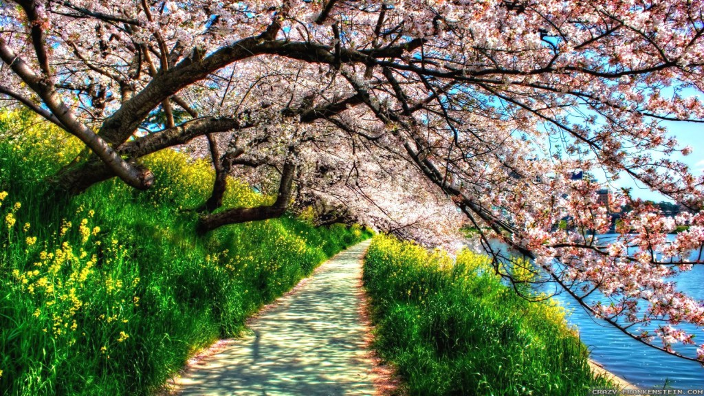6925216-spring-nature-wallpapers-hd