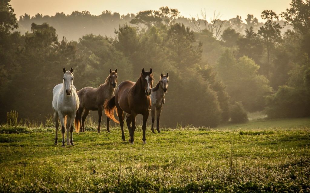 horses-in-the-wilderness-hd-wallpaper