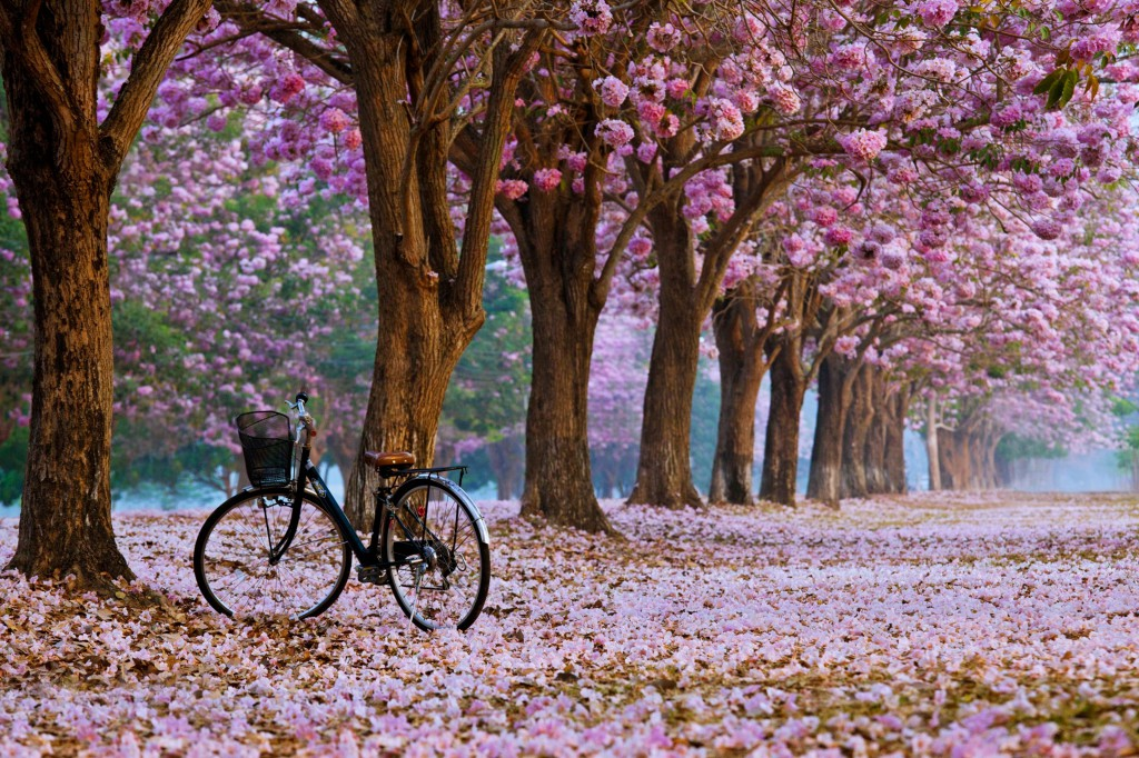 spring_bike_trees_flowers_roses_nature_landscapes_leaves_Bicycle_romantic_emotions_3840x2559