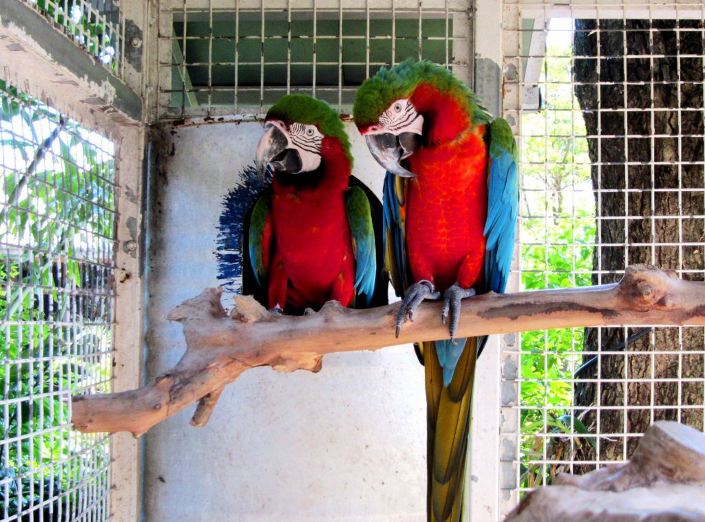 birds-colorful-parrots-beautiful-parrot-bright-full-hd-1080p-background