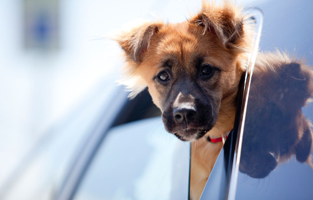 1000_summerguide_car