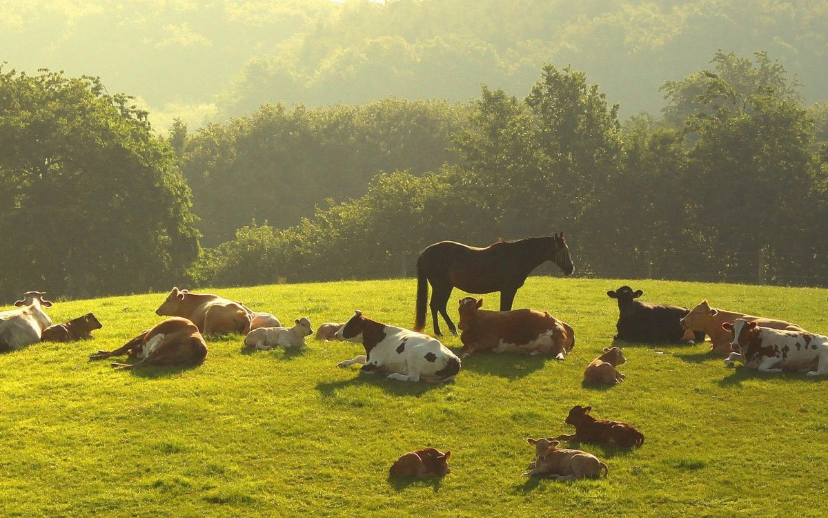 Nature___Seasons___Summer_Animals_rest_on_a_summer_meadow_078325_