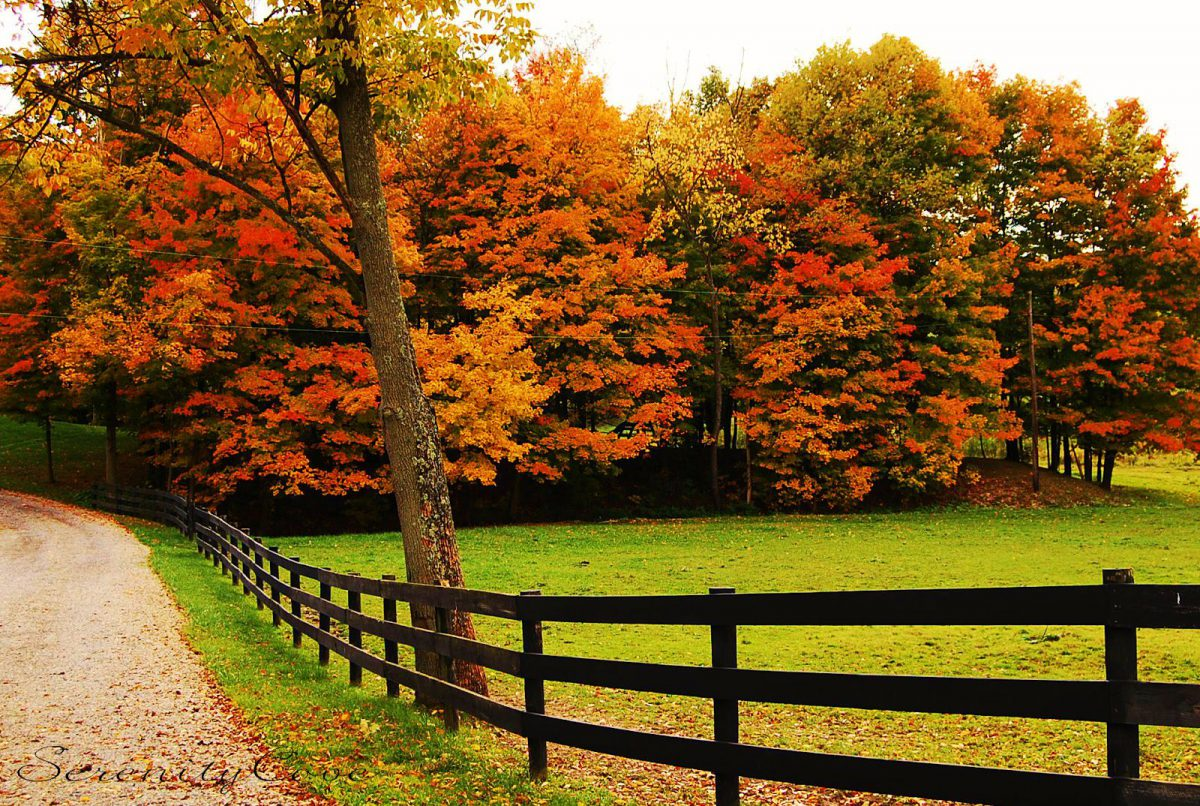 autumn_nature_fall_trees_fence_path_colors_hd-wallpaper-1584432